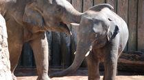 都内で子どもとのお出かけにおすすめの動物園ランキング。家族で動物にふれ合おう