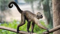 神奈川の動物園の料金はいくら?無料で入園できるところも紹介