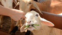 都内で生き物へのえさやりが楽しめる動物園の情報を紹介