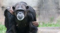 横浜周辺にある動物園の値段はいくら?5つの動物園の値段を調査
