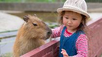 兵庫の餌やり体験ができる動物園へ家族で出かけよう