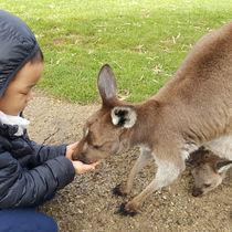 大阪周辺の動物園。子連れにおすすめのイベントを楽しもう