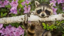 大阪周辺の動物園でさまざまな種類や珍しい生き物を見てみよう