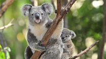兵庫の動物園で生き物に触れる体験。家族で動物を間近に感じよう