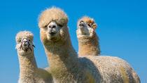 大阪の動物園ランキング。子どもとのお出かけにおすすめの動物園