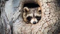 大阪の動物園の入場料金やクーポン情報。家族のおでかけにおすすめのスポット