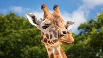ママ目線で選んだ、大阪の公園の中にある動物園について
