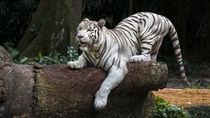 兵庫周辺の動物園。さまざまな動物の展示を親子で楽しもう