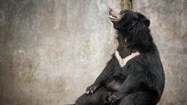 長野のさまざまな種類の生き物に出会える動物園へ家族で出かけよう