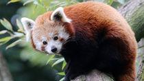 長野のさまざまな種類の生き物を飼育している動物園へ子どもと出かけよう