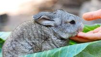 長野周辺の生き物や動物に触れるできる体験ができる動物園