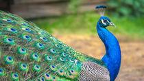 長野県の動物園。チケットの値段や施設情報、子連れで楽しめるイベントなど