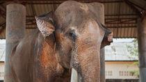 東京でさまざまな種類の生き物に出会える5つの動物園