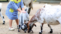 授乳室やおむつ替えスペースありなど、神奈川周辺で赤ちゃん連れにおすすめの動物園