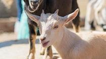 東京でさまざまな種類の生き物を飼育している動物園