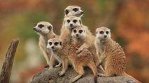 無料で楽しめる!北陸周辺にある子連れにおすすめの動物園