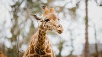 長野にある動物園。年始はいつから営業しているかやイベントなど