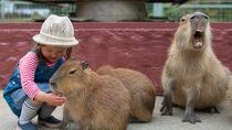 兵庫でカピバラに会うことができる動物園