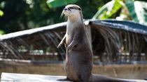 大阪周辺でカワウソに会える動物園。子どもとお出かけで楽しもう