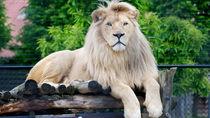 横浜周辺でさまざまな種類の生き物に出会える動物園