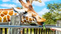 兵庫周辺のショーが行われる動物園。動物のパフォーマンスを子どもと体験しよう
