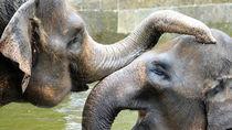 神奈川周辺の動物園で、さまざまな種類の生き物がいる動物園