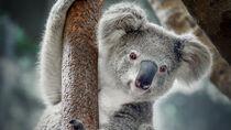 さまざまな動物が飼育されている、都内の動物園について