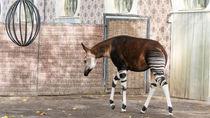 神奈川にある動物園の年始の営業はいつから?子連れで行きたい、おでかけスポット