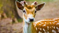 兵庫周辺で鹿に会える動物園はどこ?会うことができる園を紹介