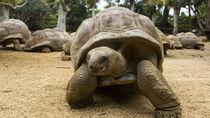 兵庫周辺で亀に会える動物園。亀を見ながらのんびりと動物園を満喫