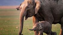 兵庫周辺で象に会える動物園。大きくて長い鼻の象を子どもと見に行こう