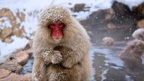 北陸で冬のお出かけにおすすめの動物園。ママ目線で選んだスポット