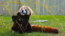 横浜周辺でレッサーパンダに会うことができる動物園