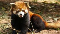横浜周辺でさまざまな種類の生き物を展示している動物園。子どもといっしょに珍しい動物を見に行こう