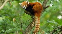 神奈川周辺でさまざまな種類の生き物を飼育している動物園