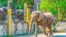 兵庫周辺でぞうに会える動物園。子どもといっしょに間近で大きな動物を見てみよう