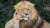 家族での観光におすすめの!静岡の動物園