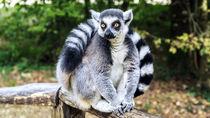 静岡県で子どもとのお出かけにおすすめの動物園。ママ目線で選んだ5つ