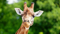 静岡県でお正月も営業している動物園はある?ママ目線で選んだスポット