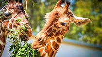 関東のさまざまな種類の生き物を展示している動物園