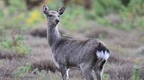 関西で鹿に会える動物園へ家族でお出かけしよう