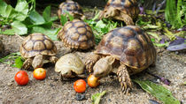 関西で亀に会える動物園。エサやりやふれあいを楽しめる動物園など