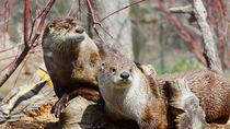 関西でカワウソにあえる動物園。活発でかわいらしい姿を見に行こう