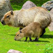 関西の体験プログラムがある動物園。ふれあいやエサやり体験など