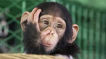 関西の動物園で芸達者な猿に会いに行こう。親子で楽しめるおでかけスポット