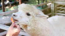 関西のえさやり体験ができる動物園。動物と間近でふれあえるスポット