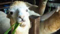 関西の餌やり体験ができる動物園
