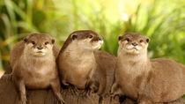 人気で愛らしいカワウソに会える関東の動物園へ家族とお出かけしよう