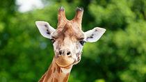 さまざまな動物に会える関東の動物園は?人気の動物園を紹介