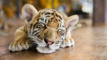 岡山周辺のさまざまな種類の生き物に出会える動物園